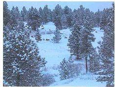 Ponderosa Ranch Minor LOT 2, Clancy, MT 59634