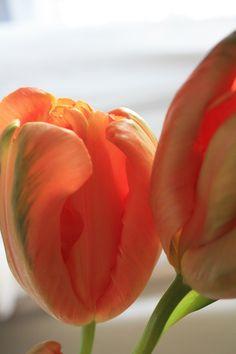 Oranje bloemen in je interieur