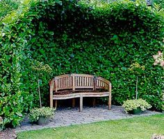 bench and trellis with climbing plant