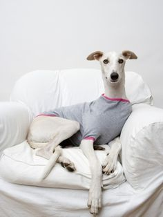 Greyhound jumper
