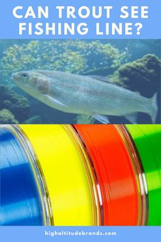 Can trout see fishing line colors? What colors are most detected by trout? The short answer is yes. Not only can trout see the line but they can also distinguish between the various colors. And, the colors of fishing line are seen differently by the trout at the various water levels. Keep reading to learn about the best colors to use in different situations and how the colors of fishing line are seen by trout at the various water depths. Fishing Line, Best Fishing, Trout Fishing Tips, Distinguish Between, Canning, Reading, Colors, Water, Green