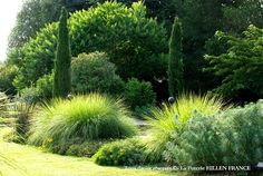 Decorative Grasses add a flow to the garden with a gentle breeze. Decorative Grasses add a flow to the garden with a gentle breeze. Love Garden, Shade Garden, Dream Garden, Garden Grass, Landscape Design, Garden Design, Landscape Grasses, Evergreen Garden, Ornamental Grasses