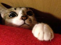 【画像】「好きな猫の部位の画像」を貼っていく