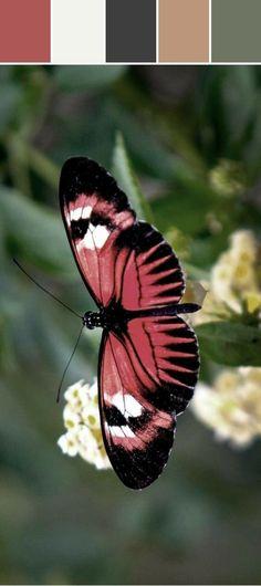 A pink butterfly! So pretty. Butterfly Kisses, Butterfly Flowers, Butterfly Wings, Beautiful Bugs, Beautiful Butterflies, Beautiful Creatures, Animals Beautiful, Moth Caterpillar, Tier Fotos