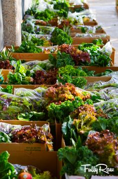 TOTAL ABUNDANCE! Fresh, local, raw, organic greens! Co-op boxes!