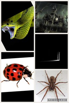 Don't be as scared of everything. (Snakes, unknown places, bugs-yes, I am scared of ladybugs and butterflies too-, the dark, and spiders)- long term