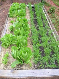 How to Plant a Fall Garden by newlifeonahomestead: Learn when to plant a fall garden, and which crops do best during the cooler months of the year