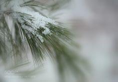 Winter Diamonds by LindaEdgecombPhotography #nature #mothernature #travel #traveling #vacation #visiting #trip #holiday #tourism #tourist #photooftheday #amazing #picoftheday