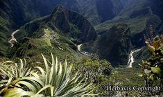 Proč jsou právě bylinky z Peru ideálním pomocníkem do každé domácí lékárničky s širokou škálou jejich použití? | Blog | Herbavis.cz Arno, Peru, Flora, Mountains, Nature, Travel, Turkey, Naturaleza, Viajes