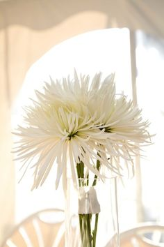 Simple yet beautiful and sophisticated Spider Mum centerpiece. Best part: doesn't need to be white - so many different colors to choose from!  http://www.bloomingmore.com/spider-mums-online-flowers-s/1883.htm