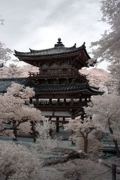 japan, nature
