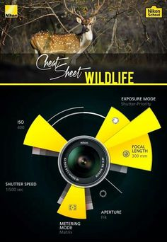 Wild Life Cheat Sheet