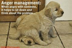Cute #Quote About Life & Anger Management for Motivational Monday