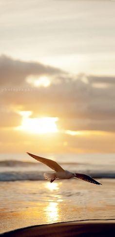 The ocean is where I find Serenity. Beautiful Birds, Beautiful World, Beautiful Pictures, Beautiful Sunrise, Nicolas Vanier, All Nature, Am Meer, Ocean Beach, Ciel