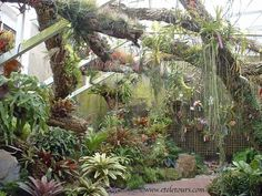 Air plants and bromeliads.