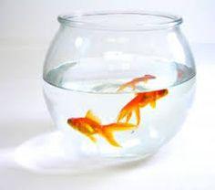 Výsledek obrázku pro akvarijní rybičky