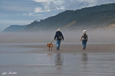 An elderly couple walk their dog on the foggy Pacific Coast in Oregon.  Their reflection can be seen in the wet sand.  This scene was captured at the Carl G. Washburne Memorial State Park, Oregon, USA.