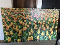 #Yellow Tulips