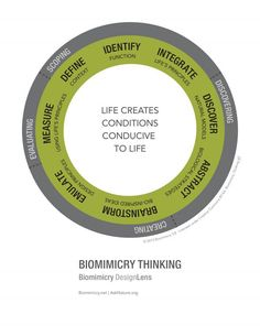 Thinking Like Nature at Cisco Secure | by Noah Keppers | Cisco Design Community | Aug, 2021 | Medium Brainstorming Activities, Interactive Activities, Biomimicry Architecture, Water Collection System, Cross Functional Team, Design Thinking Process, Material Science, Financial Analysis