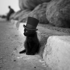 Quite possibly the cutest thing I have seen in my life.  Kitty in a teeny tiny top hat. <3