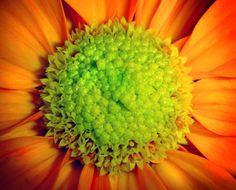 Desktop Pictures - Macro flowers: http://wallpapic.com/landscapes/macro-flowers/wallpaper-41179