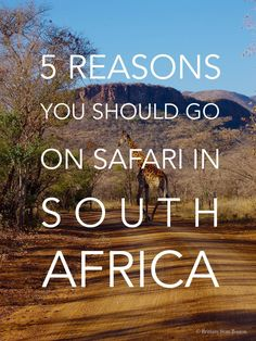 5 Reasons You Should Go On Safari in South Africa // Brittany from Boston