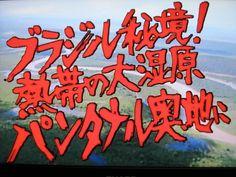 川口博探検隊