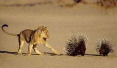 Deadly Touch – Barrie Wilkins (1993) - Barrie Wilkins/Wildlife Photographer of the Year 2014