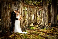 Google Image Result for http://www.historicfloridawedding.com/wp-content/uploads/2011/05/banyan-trees-wedding-florida.jpg
