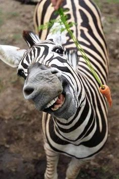 201 Smiling Animals That Will Instantly Make You These 31 super happy animals will leave you smiling after you have seen them. We might not be able to understand animals, but we can all recognise a smile as a Smiling Animals, Happy Animals, Animals And Pets, Funny Animals, Cute Animals, Scary Animals, Animals Sea, Animals Planet, Zebras
