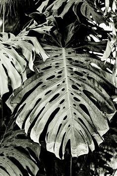 Botanical garden in Malaga - More pictures on http://www.wildbirdscollective.com #plants #botanical #garden #flowers #travel #malaga #andalucia #monstera