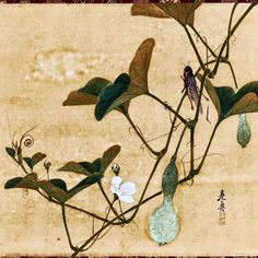 Grasshopper on Gourd Vine Shibata Zeshin Japanese Art Styles, Japanese Artists, Botanical Drawings, Botanical Art, Asian Art Museum, Japan Painting, China Art, Plant Illustration, Japan Art