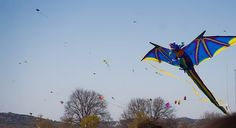 A striking blue and gold 3D Dragon at a kite festival.