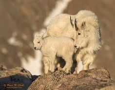 Image result for mother and baby animals