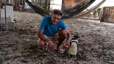 Joao Pereira de Souza, 71, rescued a South American Magellanic penguin near Rio de Janeiro in Brazil. The animal was starving and covered in oil, but after Mr Pereira de Souza helped it recover, the two became best buddies. The animal swims up to 5,000 miles just to live with Mr Pereira de Souza.