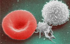 The immune system is something that is highly misunderstood not just by everyday people but [...]