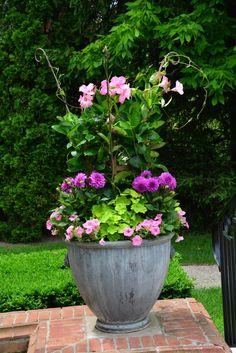 Lime green Persian Queen geraniums, Hypnotica lavender dahlias. pink mandevillea & petunias. Container by Deborah Silver
