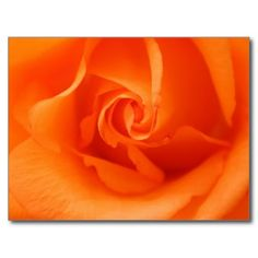 Shop Peach Orange Rose Postcard created by EManglFlowers. Peach Orange, Orange Flowers, Orange Color, Least Favorite, Favorite Color, Orange Aesthetic, Wonderful Flowers, Flower Images, Beautiful