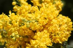 amarillo zoo memorial day