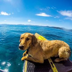 This warmer weather has me thinking about paddle boarding this summer with my humans @hikingwithdogs_