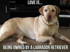 ♡I totally agree. My chocolate Labrador completely owns me!!!