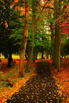 This seems like a peaceful place on an Autumn day!