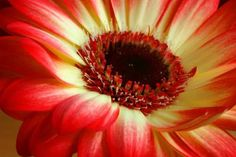 Photo about Red and yellow flower. Image of life, growth, flower - 535300