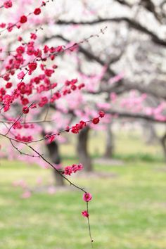 Spring is coming, and with it comes beautiful pictures of birds chirping and flowers blooming