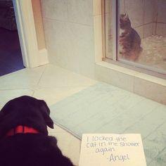 Cat Shaming   dog shaming  dog shame   Animal Veterinary Center   AVMA Veterinarian