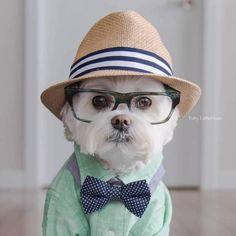 Toby, o cachorro hipster que está arrasando no Instagram
