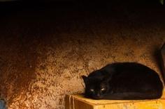 Violeta!Da série gatos, uma foto minha (Paula Oliveira).