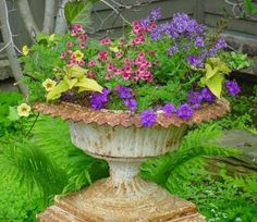 Iron container planted with Verbena, Calibrachoa, Nemesia, Diascia and Sweet Potato Vine.
