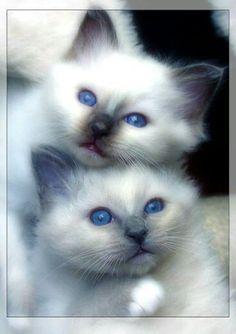 Hemels blauwe ogen