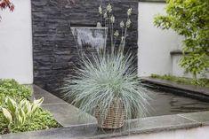 Festuca er en robust og dekorativ staude og kommer i salg tidlig på våren. Ornamental Grasses, Go Outside, Garden Inspiration, Garden Plants, Outdoor Living, Planters, Yard, Design, Outdoors